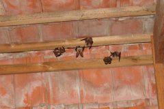 kolonie netopýrů