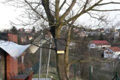 Netopýří budka na stromě.