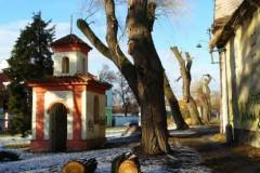 Pořezané doupné stromy v Ruyzyni, kde zimovali netopýři.