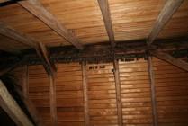 Část největší kolonie netopýra velkého na půdě hájovny v Ledcích.