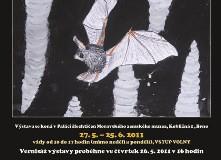 Plakát výstavy Podivuhodný život netopýrů